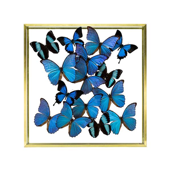 Large creel gow butterflies