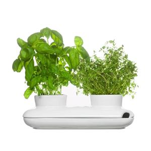 Medium sagaform herb pot duo