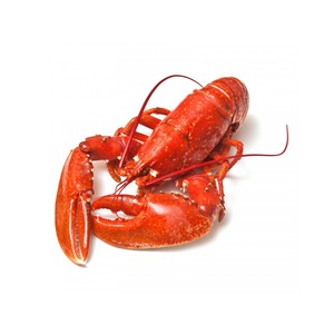 Medium lobster