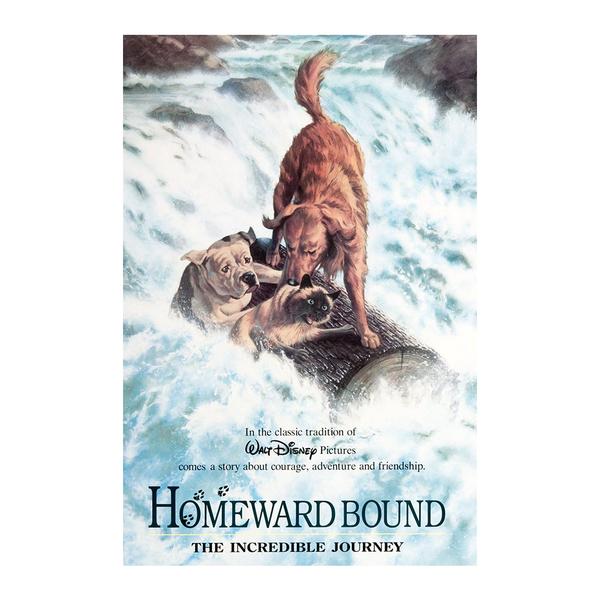 Large homewardbound
