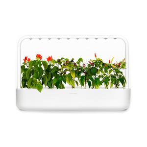 Medium click and grow smart garden