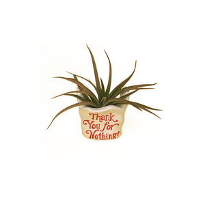 Medium hellohappyplants thank you for nothing
