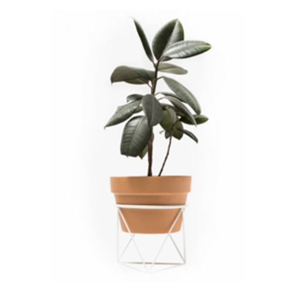 Large eric trine octahedron ring planter short