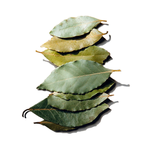 Medium daphnis and chloe selected bay leaves