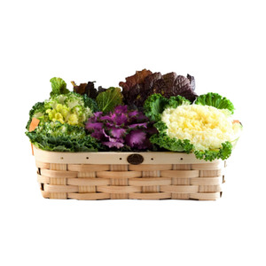 Medium basket