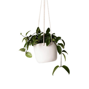Medium tina frey hanging planter