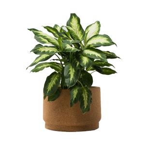 Medium 2large planter