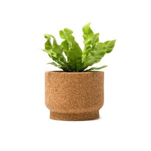 Medium cork planter