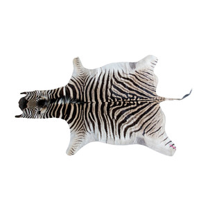 Medium zebra