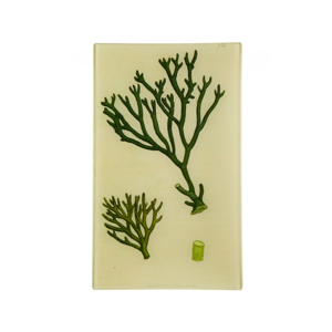 Medium moss green sea plant rectangle tray