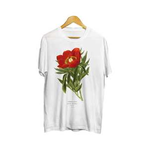 Medium paeonia officinalis unisex t shirt   botanical illustration  botanical art  botany art  flower tshirt  peony tshirt  peony art